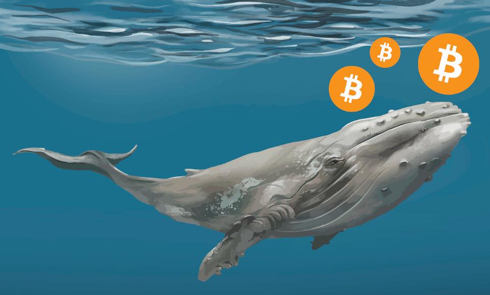 Биткоин-киты увеличили накопления на $ 11 млрд. за последний месяц