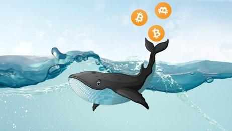 Glassnode: количество биткоин-китов обновило исторический максимум