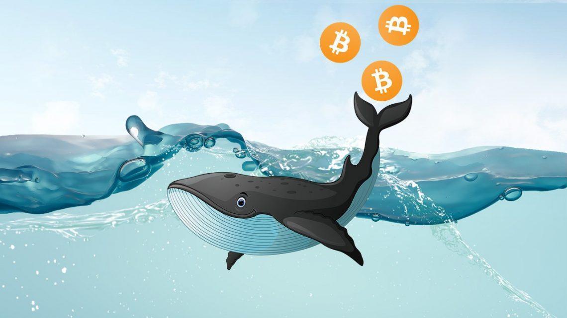 Количество биткоин-холдеров не желающих продавать биткоин продолжает расти
